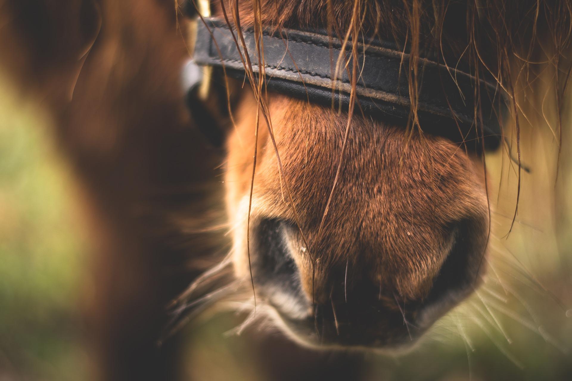 Populära hästraser i Sverige