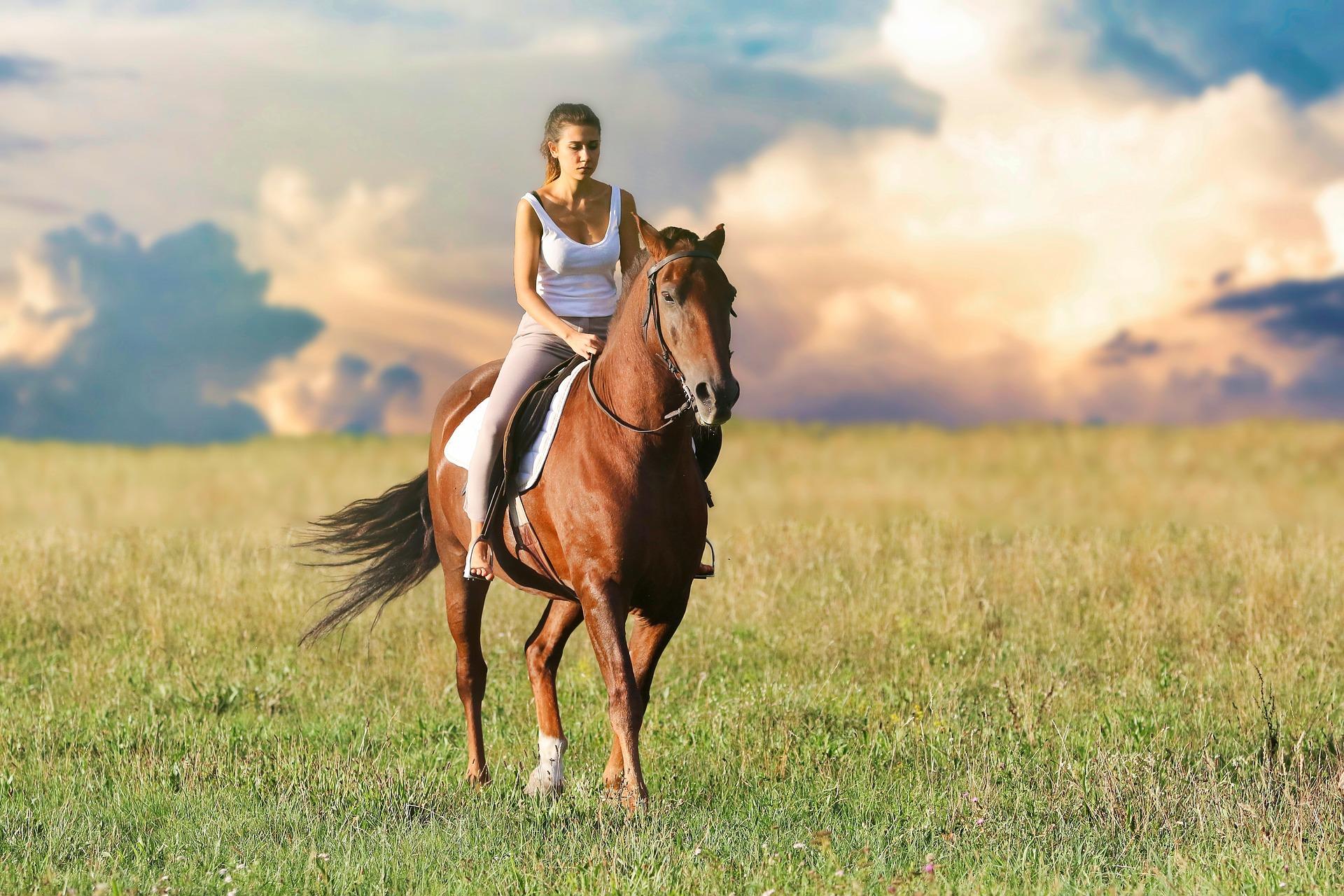 Att köpa en häst eller ponny