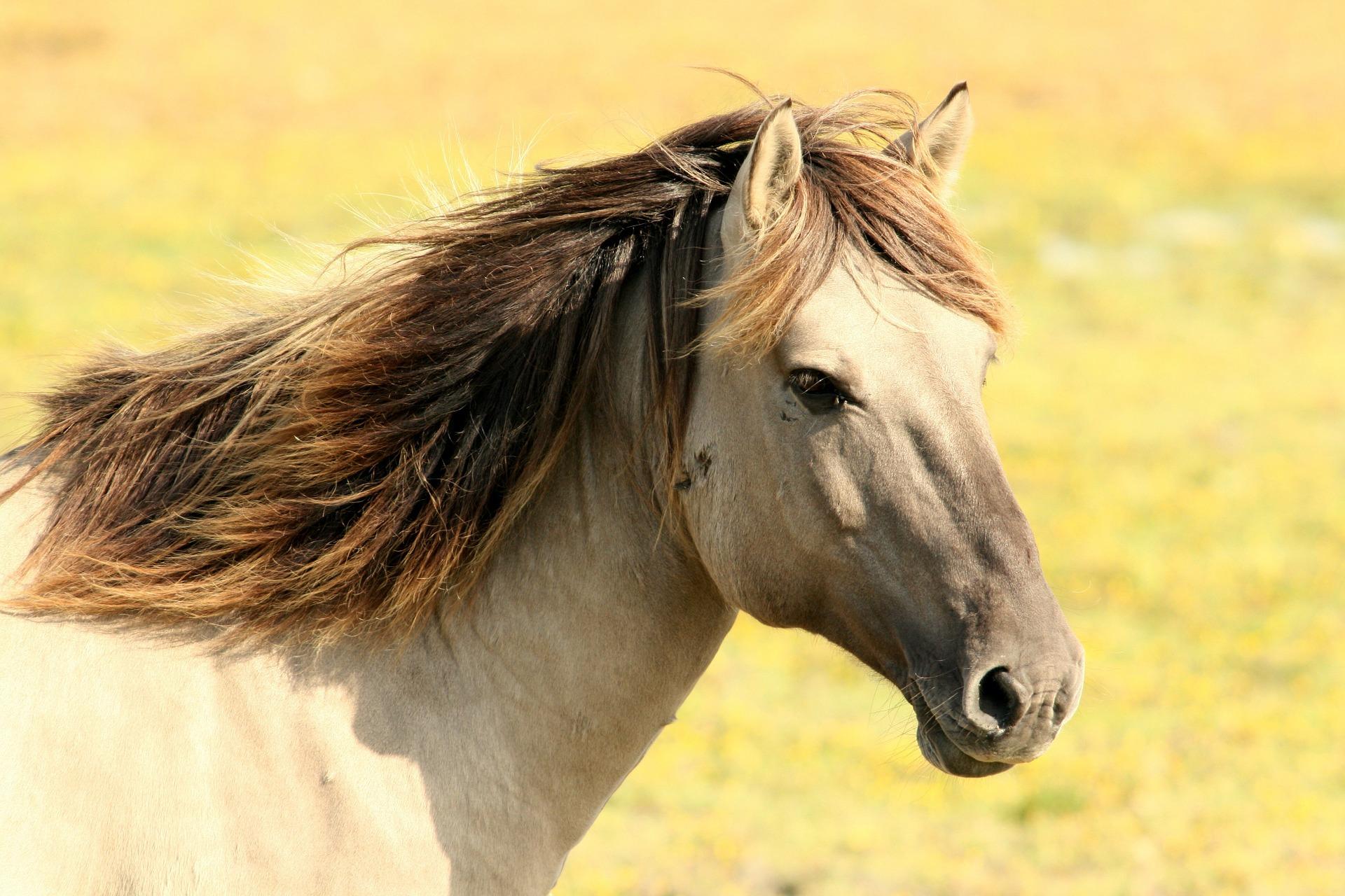 Hästtjejer blir eftertraktade chefer